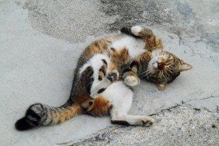 """焦りは禁物…猫が心を開いた時に""""にゃんたま""""もコンニチハ"""