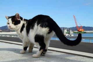 """復興が進む港で発見 白黒猫の""""にゃんたま""""に哲学を感じる"""