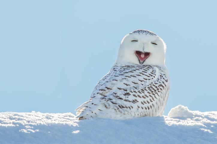楽しいから「笑う」のではなく、笑うから「楽しく」なる(写真:iStock)