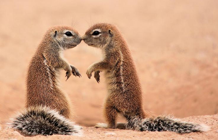 キスで幸せな人生を(写真:iStock)