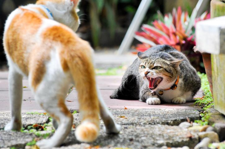 お互いにヒートアップしてもしょうがない(写真:iStock)