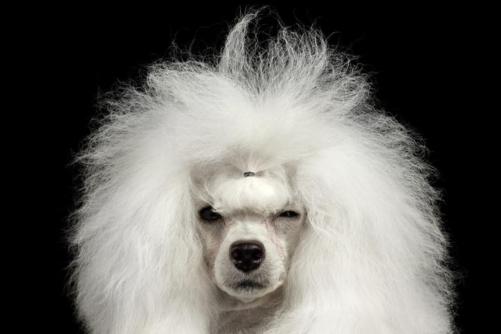 冬はとくに忘れがちな「毛」問題(写真:iStock)