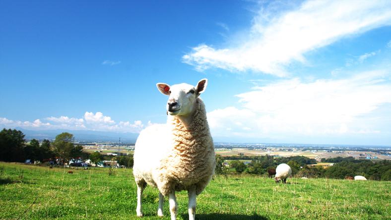放牧されているような解放感(写真:iStock)