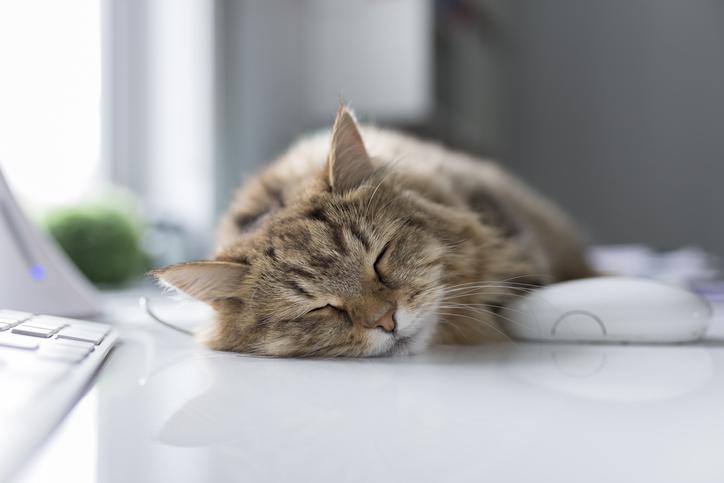 短いお昼寝で脳が活性化されるんだって(写真:iStock)