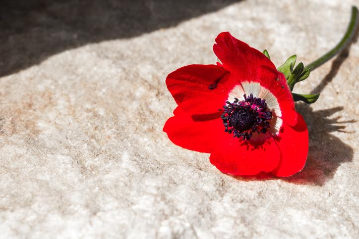 赤のコクリコは「喜び」のシンボルです(写真:iStock)