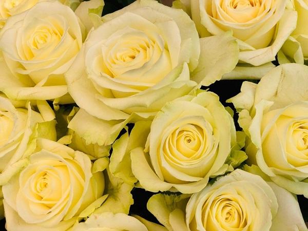 今回のお花はバラ(C)斑目茂美