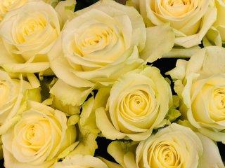 開運花師が解説します ピンクのバラを恋愛お助けアイテムに