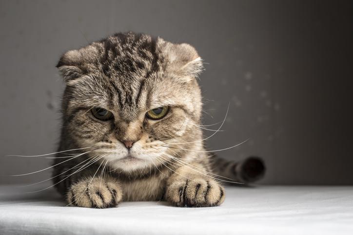 なぜ怒っているの?(写真:iStock)