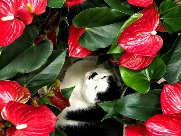花言葉は「情熱」(写真:斑目茂美)