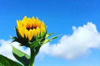 金運に効く最強の花とは? いつの世もそれがキニナルの巻