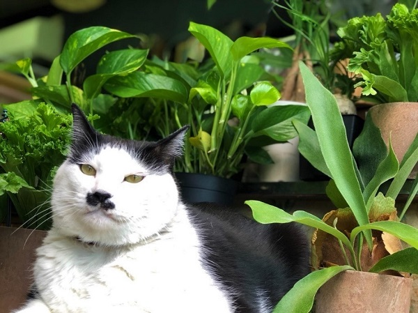 観葉植物とさぶ店長(写真:斑目茂美)