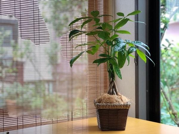 観葉植物は自然界のパワーを詰め込んだ奇跡の1鉢(写真:斑目茂美)