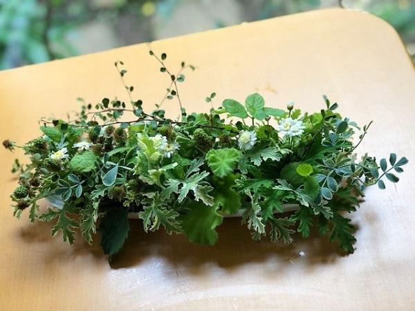 万能植物「ハーブ」(写真:斑目茂美)
