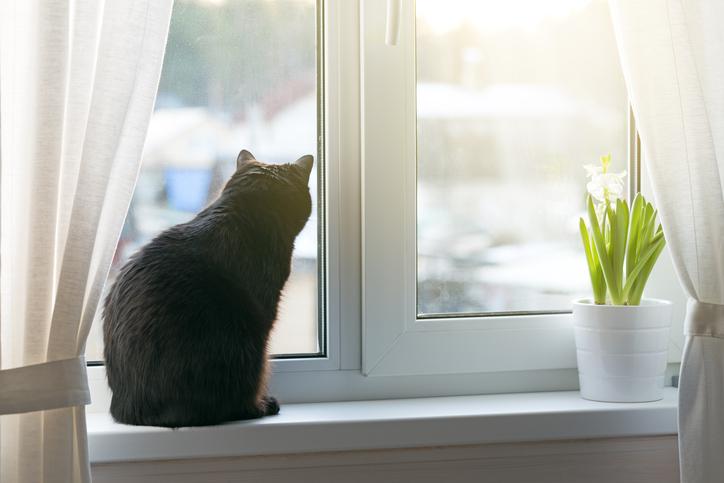 主人公はOLのお姉さんに拾われたオスの子猫(写真:iStock)