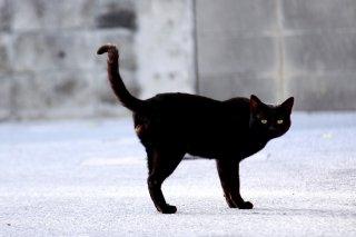 """夕陽で赤く輝いて…黒猫""""にゃんたま""""は美しい絵のようだった"""