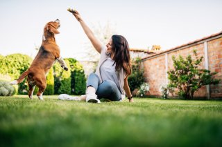 犬を飼いたいと思ったら…救える命があることも知ってほしい