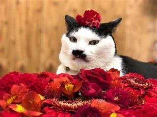 """ガーベラやアンスリウムも """"赤い花""""に秘められた厄除けの力"""