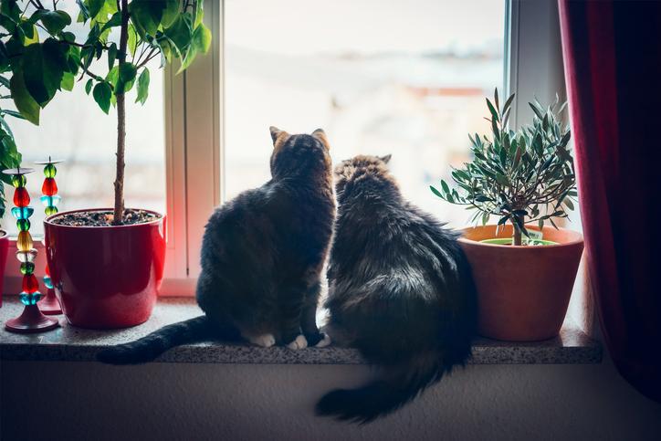 身勝手さに猫もソッポ(写真:iStock)