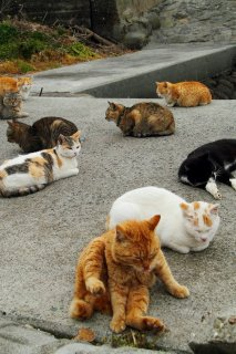 """今日の議題はにゃに? 夕暮れの猫集会でポロリ""""にゃんたま"""""""