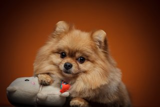 犬でなく人間だったらと思うと…モラ気質なワンコの実態3選
