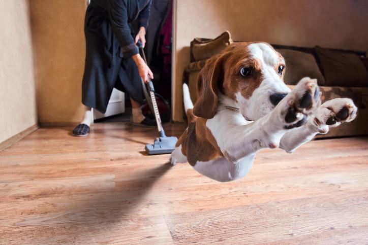 ペットの世話まで負担する羽目に…(写真:iStock)