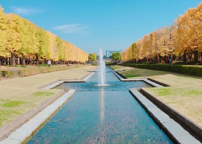 イチョウ並木がきれいな昭和記念公園(写真:東城ゆず)