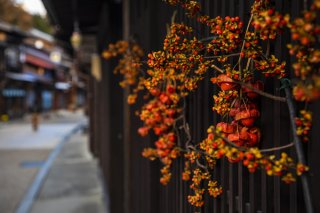 秋から冬へ 2019.11.25(月)