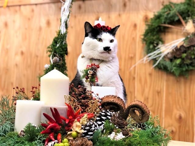完璧なクリスマス装飾の中にさぶ店長(写真:斑目茂美)