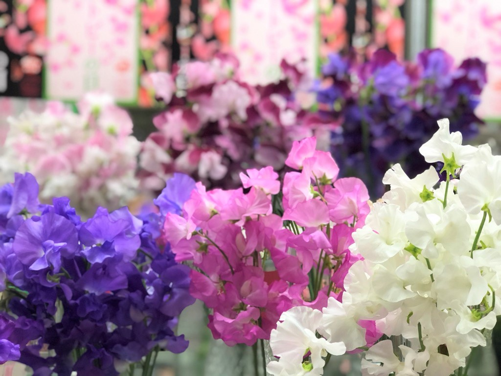 花市場のショーウィンドーには今イチオシ商品が並びます