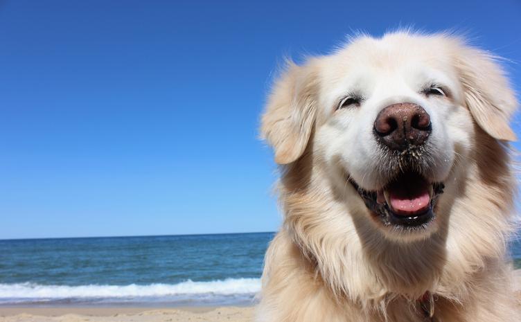 いつでも笑顔でポジティブに(写真:iStock)