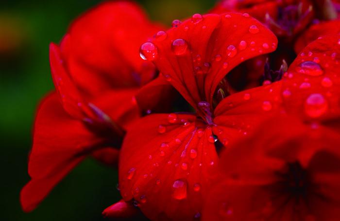 「赤い言の葉」より