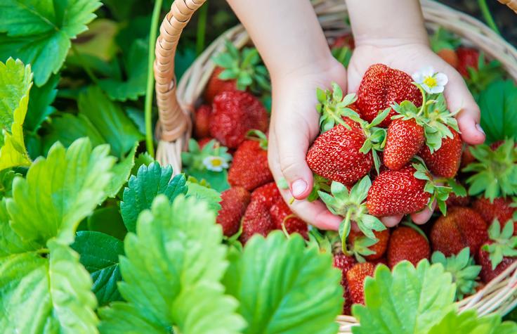 春の恵みたっぷりのいちご(写真:iStock)