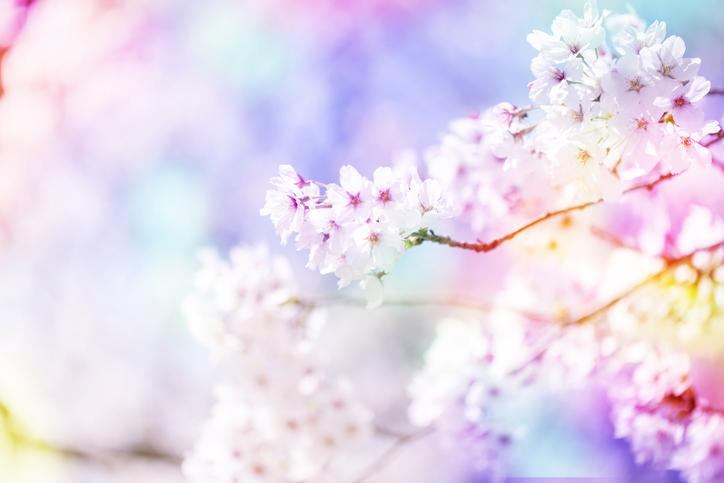 アートで桜を楽しんでみては?(写真:iStock)