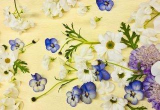 生活保護者の柩に添えられた友人からの別れの花は「心の花」