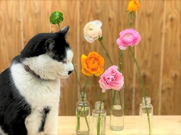 さぶ店長も興味津々 このあと頭突きでお花に臭い付け