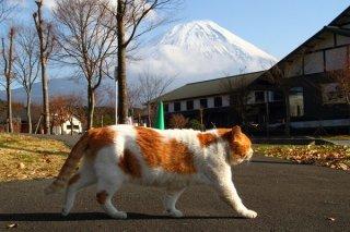 """デキる男はさりげなく…富士山を背景にサービス""""にゃんたま"""""""
