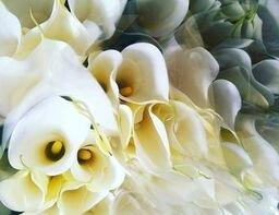 イベント自粛で影響大も…凜とした花「カラー」にもらう勇気