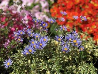 四季を感じて心の癒しと希望をアナタに…植物生活のススメ#1