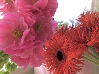 富と名誉と愛の花「シャクヤク」 咲かせるポイントも解説!