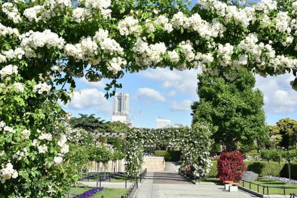 横浜の市花はバラ、春にはバラがいっぱい!(写真:Aribaba)