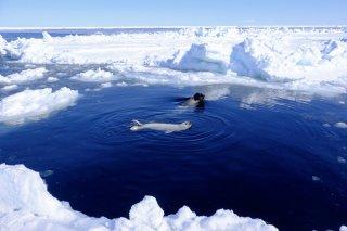 世界の海はつながっている 2020.6.2(火)