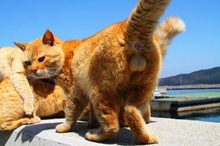 """揉め事か!?威厳たっぷりボス猫候補の""""にゃんたま""""兄貴"""