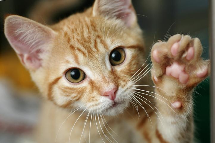 猫には罪はないけれど…(写真:iStock)