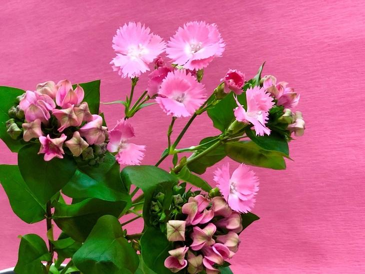 ピンクのお花はまさに女性の運気を爆上げ