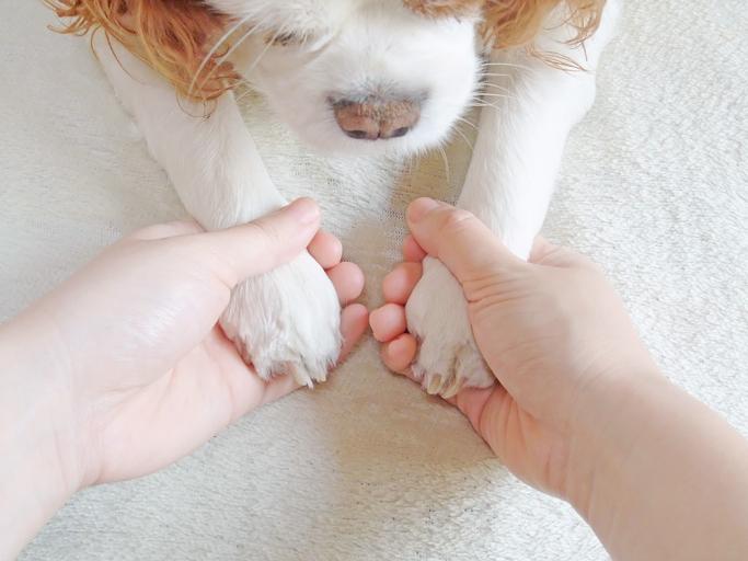 ペットの毛には要注意(写真:iStock)