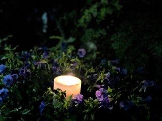 優しく光る植物が心を整えてくれる…快適な夏の夜の過ごし方