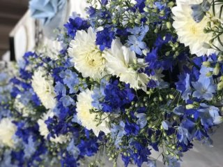 コロナ太り解消!デルフィニウムの青い花で食欲コントロール