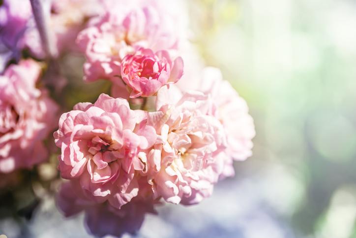 優しい香りに癒やされる(写真:iStock)