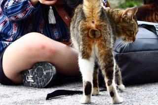 """猫好きは世界共通!外国人にも愛でられ照れる""""にゃんたま""""君"""