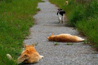 """恋に挑む3匹の""""にゃんたま"""" メス猫の心を射止めるのはだれ?"""